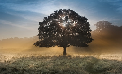 Sunrise sunbeams bursting through tree onto foggy landscape