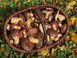 Pilzkorb mit Maronenröhrling und Herbstblättern