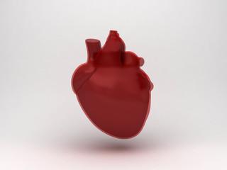 Anatomia cuore ventricolo
