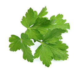 Leafs of fragrant fresh parsley