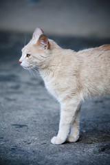 Gato mascota animal
