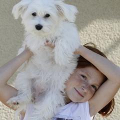 Jeune fille et son bichon maltais