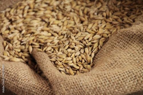 Getreide im Sack