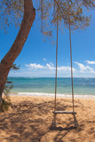 Tree swing on a tropical beach