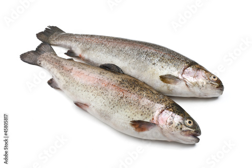 due trote iridee - two rainbow trouts