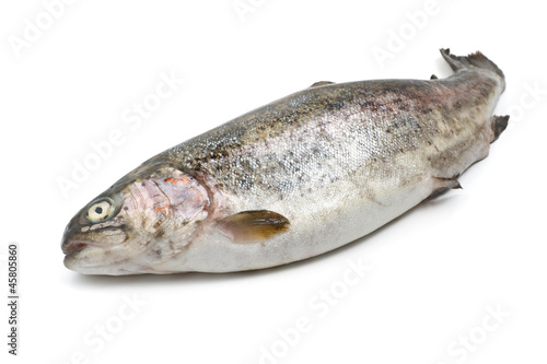 trota iridea - fresh rainbow trout