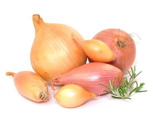 Gemüse, Zwiebel