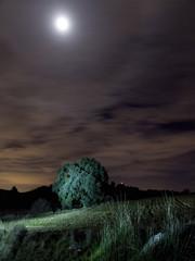 La encina y la luna