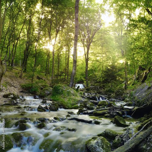 wodospad-lesny