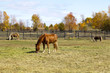 Brown Horse on American Countryside