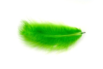 Green feather on a white background