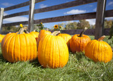 Ripe pumpkins on grass