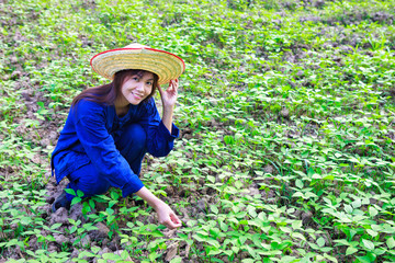 Asian women working in peanut field