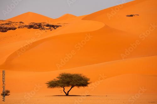 Fototapeten,sonne,park,sand,zeit