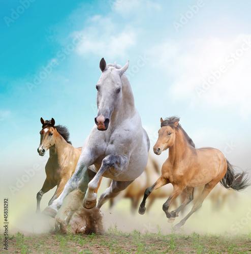 Naklejka konie