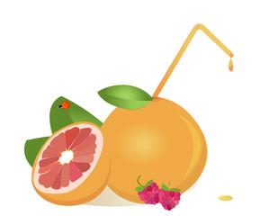 grapefruits juice ,vector