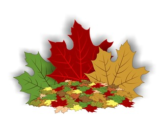 Autumn - maple leaves 2