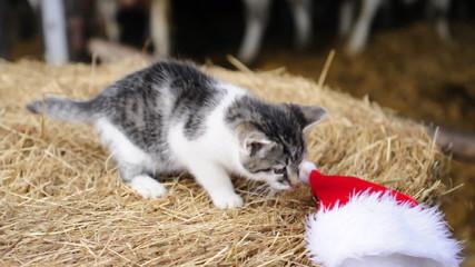 Katze spielt mit Weihnachtsmütze