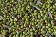 tante olive