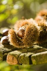 Chestnuts - Kastanien