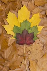 Braunes Herbstlaub mit bunten Herbstblättern