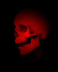 Colour Skull Head