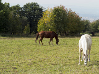 brown and white horses on pasture