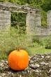 Fall at McIntosh Sugar Mill