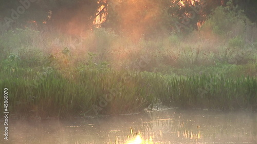 Mist rises over swamp during dawn