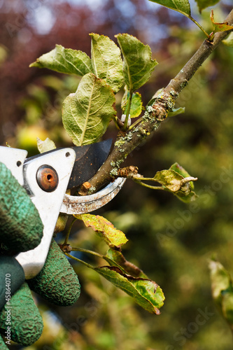 pruning in the garden