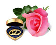 Wedding rings in golden box and beautiful pink rose