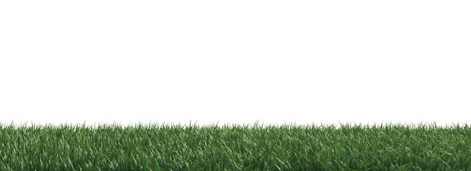 herbe pelouse