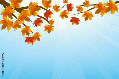 autumn leaves against the blue sky