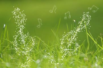 erfrischender Morgentau, Wassertropfen bilden Noten