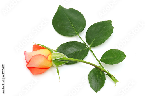 Leinwanddruck Bild red rose isolated on white background