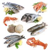 Fisch Collage