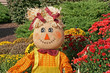 Decorative fall scarecrow with Chrysanthemums