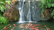 Waterfall with group fish.