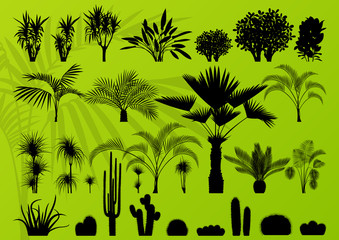 Exotic plant, bush, palm tree and cactus background vector
