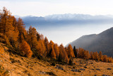 autunno - paesaggio con conifere