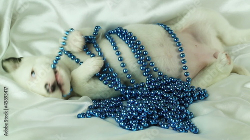 newborn puppy plays with blue beads