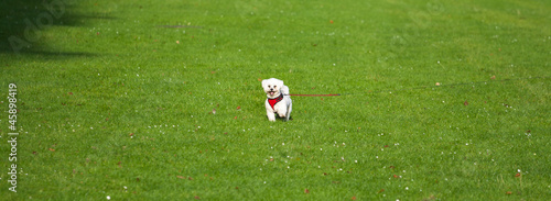 Small dog in the middle of the field