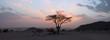 Tree in the Sahara desert, sunset - 45900861