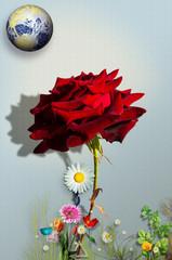 Damask red rose