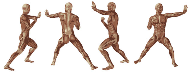 High resolution conceptual human 3D anatomy body with muscle
