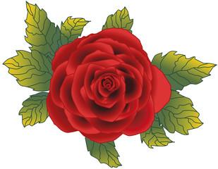 Lindas Rose rot