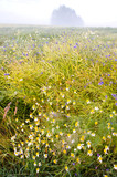 summer end meadow landcaspe and mist