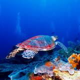 Fototapeta wodnych - azja - Pejzaż podwodny