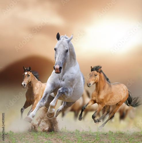 Fototapety, obrazy : horses in sunset