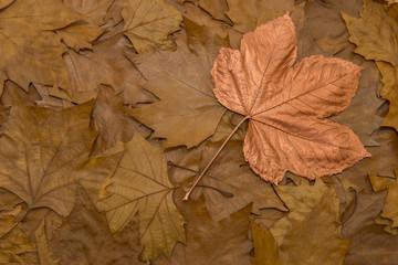 Goldener Herbst bronzenes Blatt